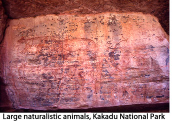 Large naturalistic animals: Kakadu National Park