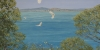 Australian artist Sue Smith - Clear against the blue